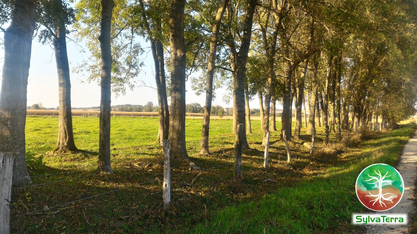 Alignements-arbres-SylvaTerra