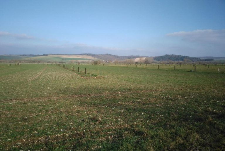 Plantation SuylvaTerra