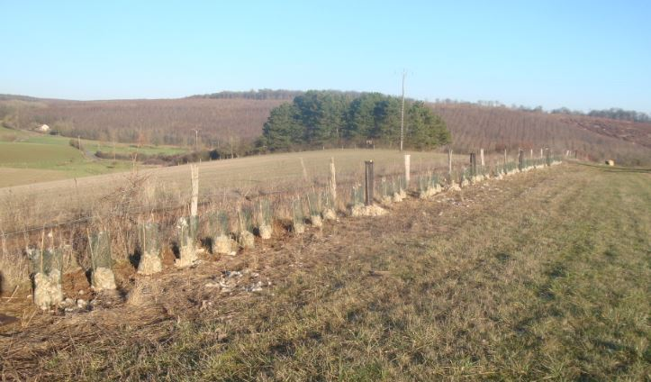 PlantationStMedard-Sylvaterra-17122018-2