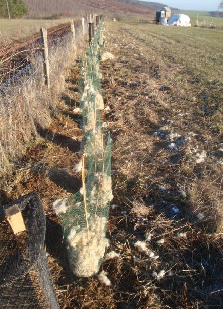 PlantationStMedard-Sylvaterra-17122018-3