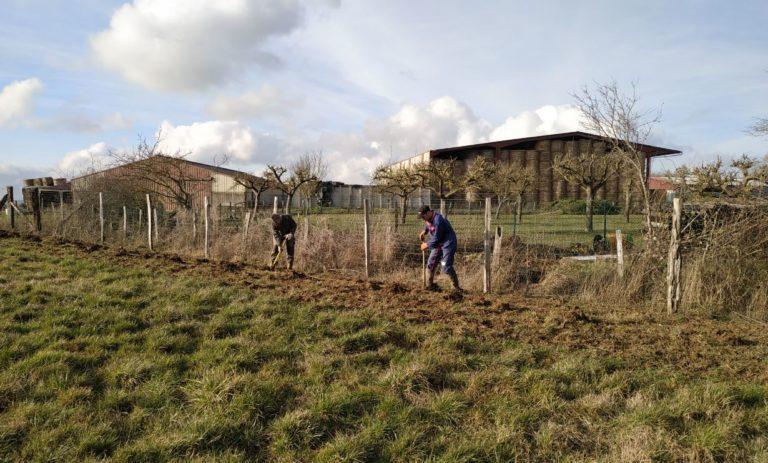 BrousseyRaulecourt-plantationHaie12022019_SylvaTerraAgroforesterie